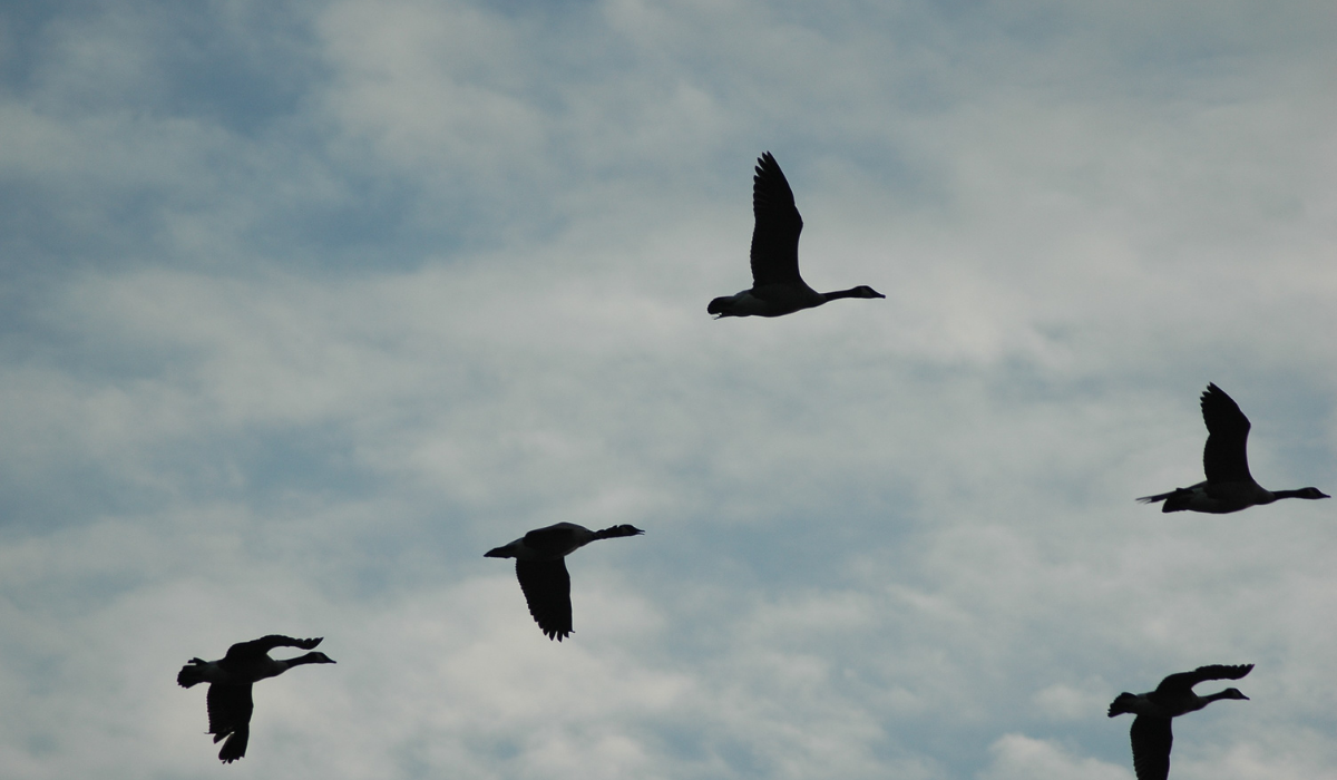 10 Tips for Migrating your CRM